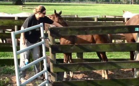 Cavalli: Video Corso Cura e Gestione - Florida University