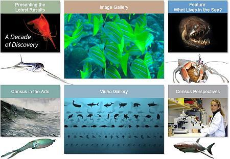 1° Censimento Vita Marina: Quanti pesci ci sono in mare ?