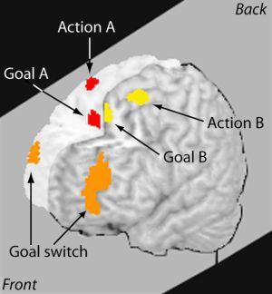 Multitasking e Produttività: Cosa succede nel tuo Cervello