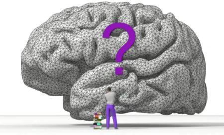 TED Talks - D.Wolpert: La vera ragion d'essere del cervello